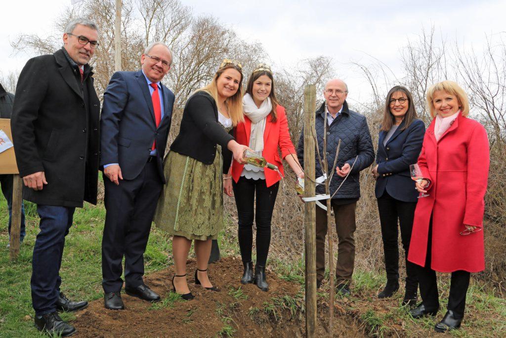 Sulzfeld am Main: Neue Weinkönigin pflanzt Baum - PRIMATON